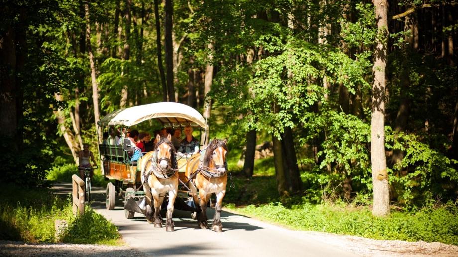 Besucher bei einer Kremserfahrt mit Pferdekutsche durch Mühltal