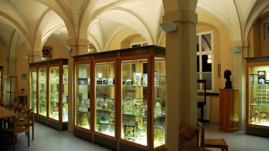 Anatomische Sammlung des Universitätsklinikums Jena - Fachbesuch Jena